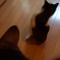 【猫動画】2日でRT2万超え!Twitterで話題のリアル版「猫ピッチャー」とは・・・