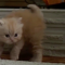 【猫動画】かわいさがヤバイ!!ふわふわ子猫の変わったダンスとは・・・!?