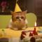 【猫CM】人気ふてネコCMの続編!!整体しているのはネ・・・!?ふてニャンのバースデイとは・・・!?
