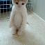 【猫動画】一体どうした!?直立不動の謎の行動をとる子猫とは・・・!?