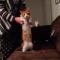 【猫動画】え!?思わず2度見してしまう猫動画!猫を持ち上げると・・・