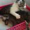 【猫動画】え、いきなり!?遊びながら子猫がとった驚きの行動とは・・・!?