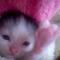 【猫動画】天使すぎる!!ポケットサイズの赤ちゃん子猫の反応とは・・・!?