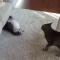 【猫画像】イカクする猫 ひるむ猫