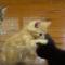 【猫動画】子猫が山盛り!!かわいすぎる子猫が山盛りボウルとは・・・!?